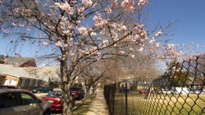 spring in annapolis